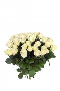 Роза Avalanche 60см. Акция